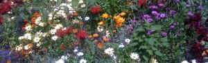 My Garden in Summer - section